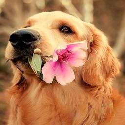alvo-dog
