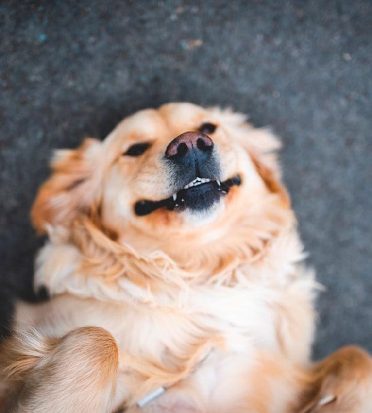 cachorro-4