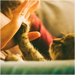 cat-circle